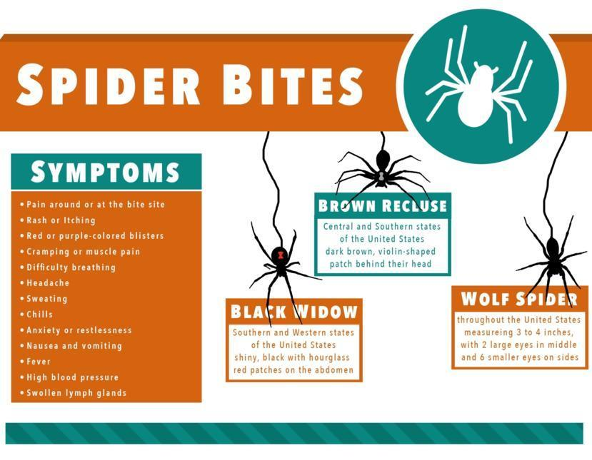 Spider Bite Symptoms Causes Treatment And Diagnosis Findatopdoc