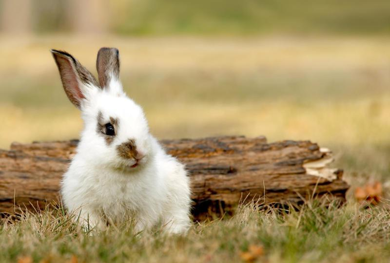 Is Seeing A Rabbit Good Luck