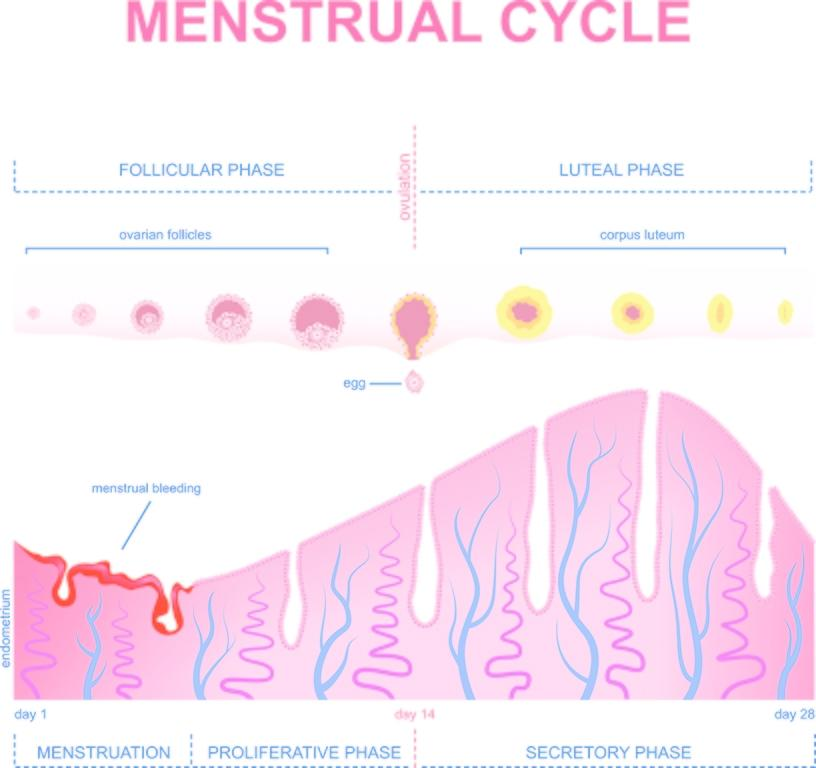Implantation Bleeding: Causes, Diagnosis, and Treatment | FindATopDoc