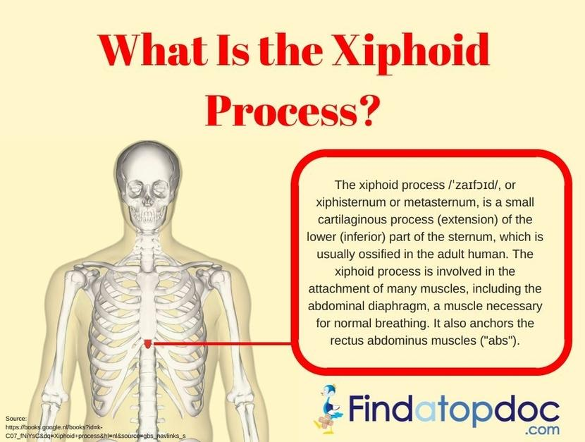 What Is The Xiphoid Process